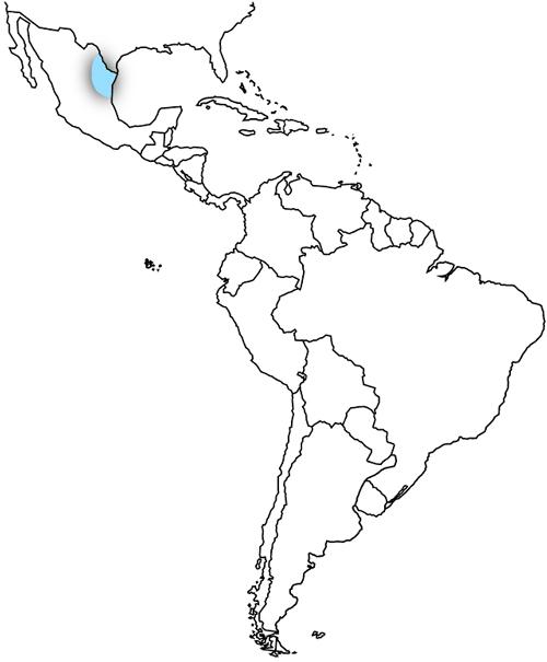 Mexico Maquilladora